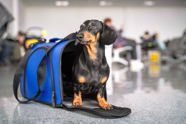 Pet Scams on Rise During COVID-19