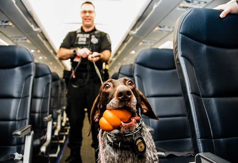 Paw Patrol: Meet the K-9 Units That Protect PIT