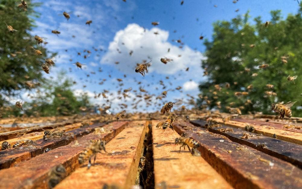 State Officials Abuzz for PIT's Beekeeping Program